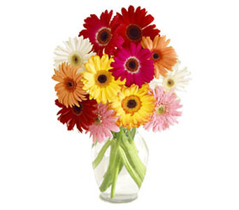 Gerbera Daisies-FREE NEXT DAY DELIVERY! in Cohasset MA, ExoticFlowers.biz