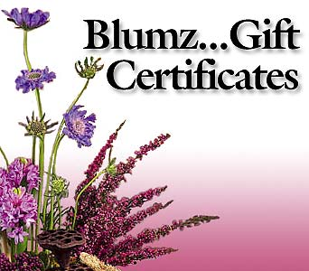 Blumz... Gift Certificates in Detroit MI, Blumz...by JRDesigns