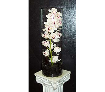 Cymbidium Orchid in Glass Vase in New York NY, Fellan Florists Floral Galleria