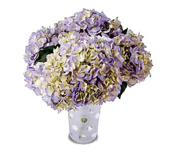 Hydrangea Vase in New York NY, CitiFloral Inc.