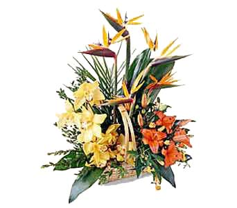 Exotic Basket Arrangement in New York NY, CitiFloral Inc.