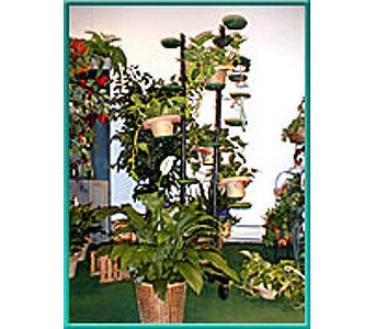 HP002 in New Bedford MA, Sowle The Florist