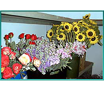 HP003 in New Bedford MA, Sowle The Florist