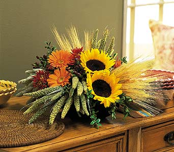 Sunflower Harvest in Denver CO, Lehrer's Flowers