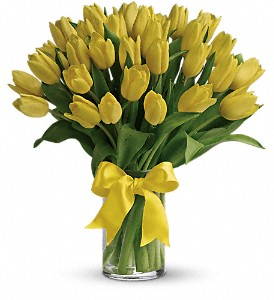 Sunny Yellow Tulips in Washington, D.C. DC, Caruso Florist