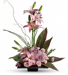 Imagination Blooms with Cymbidium Orchids in Bay City MI, Keit's Greenhouses & Floral