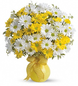 Teleflora's Upsy Daisy in Baltimore MD, Lord Baltimore Florist