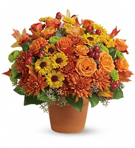 Sugar Maples in Horseheads NY, Zeigler Florists, Inc.
