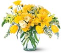 Sunshine Express in Dallas TX Petals & Stems Florist