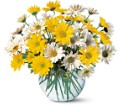 Dashing Daisies in Big Rapids, Cadillac, Reed City and Canadian Lakes MI Patterson's Flowers, Inc.