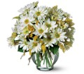 Cheerful Daisy's by Petals & Stems in Dallas TX Petals & Stems Florist