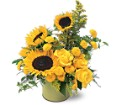 A Pot of Sunflowers in Manalapan NJ Rosie Posies