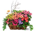 Deluxe European Garden Basket in Laurel MD Rainbow Florist & Delectables, Inc.