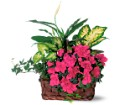 Azalea Attraction Garden Basket in Bend OR All Occasion Flowers & Gifts