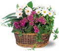 Traditional European Garden Basket Local and Nationwide Guaranteed Delivery - GoFlorist.com