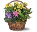 Petite European Basket in Arlington Heights IL Sylvia's - Amlings Flowers