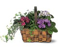 Mixed African Violet Basket in Laurel MD Rainbow Florist & Delectables, Inc.