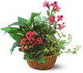 Dish Garden with Pinks Local and Nationwide Guaranteed Delivery - GoFlorist.com