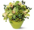 Shades of Green in Burlington NJ Stein Your Florist