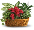 Plants Galore Local and Nationwide Guaranteed Delivery - GoFlorist.com