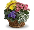 Spring Has Sprung Mixed Basket in Springfield OH Netts Floral Company and Greenhouse