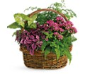 Secret Garden Basket in Rochester MN Sargents Floral & Gift