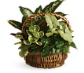 Emerald Garden Basket in Mount Morris MI June's Floral Company & Fruit Bouquets