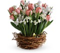 Tulip Song in Park Ridge NJ Park Ridge Florist