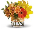 Sunny Siesta in New Port Richey FL Holiday Florist