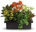 Stylish Plant Assortment in Norwich NY Pires Flower Basket, Inc.