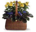 Garden To Go Basket in Des Moines IA Doherty's Flowers