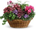 Simply Chic Mixed Plant Basket in Wolfeboro Falls NH Linda's Flowers & Plants