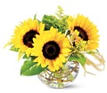 Teleflora's Sassy Sunflowers in Tuckahoe NJ Enchanting Florist & Gift Shop