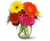 Teleflora's Fiesta Gerbera Vase in El Cerrito CA, Dream World Floral & Gifts