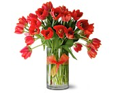 Teleflora's Radiantly Red Tulips Premium in Hendersonville NC, Forget-Me-Not Florist