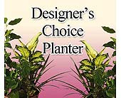 Designers Choice<br>Mixed Planter, picture