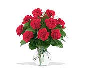12 Red Carnations in Charlotte NC, Starclaire House Of Flowers Florist