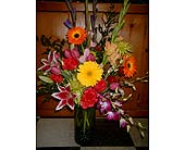 Designer''s Choice - great value!!! in Dallas TX, Z's Florist