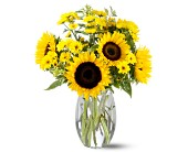 Teleflora's Sunflower Splash in Bradenton FL, Bradenton Flower Shop