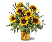 Sunrise Sunflowers in Vancouver BC, Downtown Florist