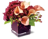Teleflora's Calla Classique in Back Bay MA, Fresco Flowers