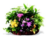 Matilda''s GardenStarting at $124.95 in Wichita KS, Tillie's Flower Shop