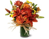 Orange Zest in Rochester NY, Fabulous Flowers and Gifts
