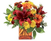 Teleflora's Autumn Awe in Bellevue WA, Lawrence The Florist