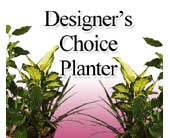 Designer's Choice Planter Arrangement in Bakersfield CA, White Oaks Florist