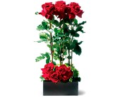 Scarlet Splendor Roses in Ottumwa IA, Edd, The Florist, Inc