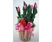 Potted Tulips in Indianapolis IN, Gillespie Florists