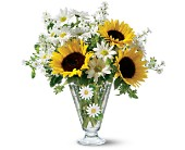 Teleflora's Delicate Daisy Bouquet in El Cerrito CA, Dream World Floral & Gifts
