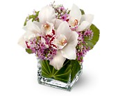 Teleflora's Lovely Orchids in Orlando FL, Windermere Flowers & Gifts