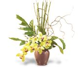 Glory of Green Orchids in Bismarck, North Dakota, Dutch Mill Florist, Inc.
